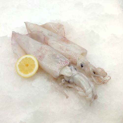 comprar calamar