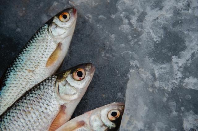 Comprar pesacdo fresco ha de ser una realidad. Te enseñamos a diferenciar un pescado fresco de uno que no lo está. Compra segura
