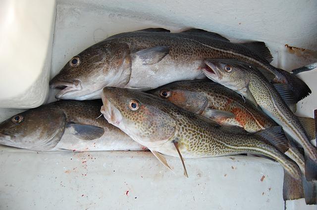 Bacalao en temporada de invierno